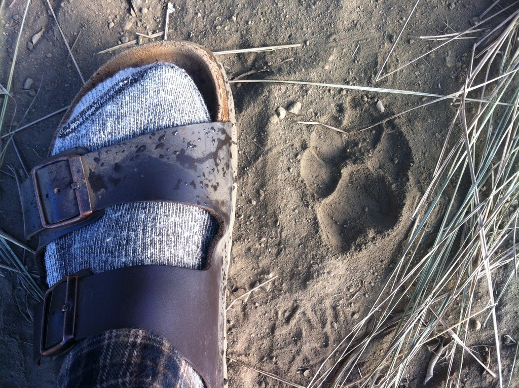 A hyena track found in the morning, in the middle of camp after a night of hyenas prowling around.  Note the purpose of this photo is NOT to highlight my camping footwear, but rather the wild animal track...